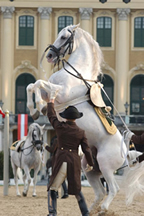 high_school_lipizzan_sm